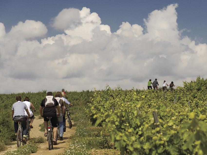 Ciclistes durant una visita a les vinyes de les caves Castellroig (Marc Castellet Puig)