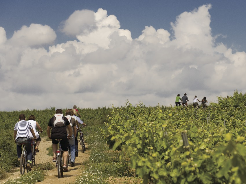 Cyclists during a visit to the Castellroig wine cellar vineyards