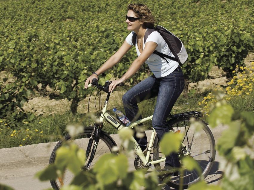 Ciclistas durante una visita a las viñas de las bodegas Castellroig