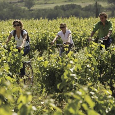 Ciclistes durant una visita a les vinyes de les caves Castellroig
