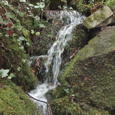 Rierol al parc natural del Montseny