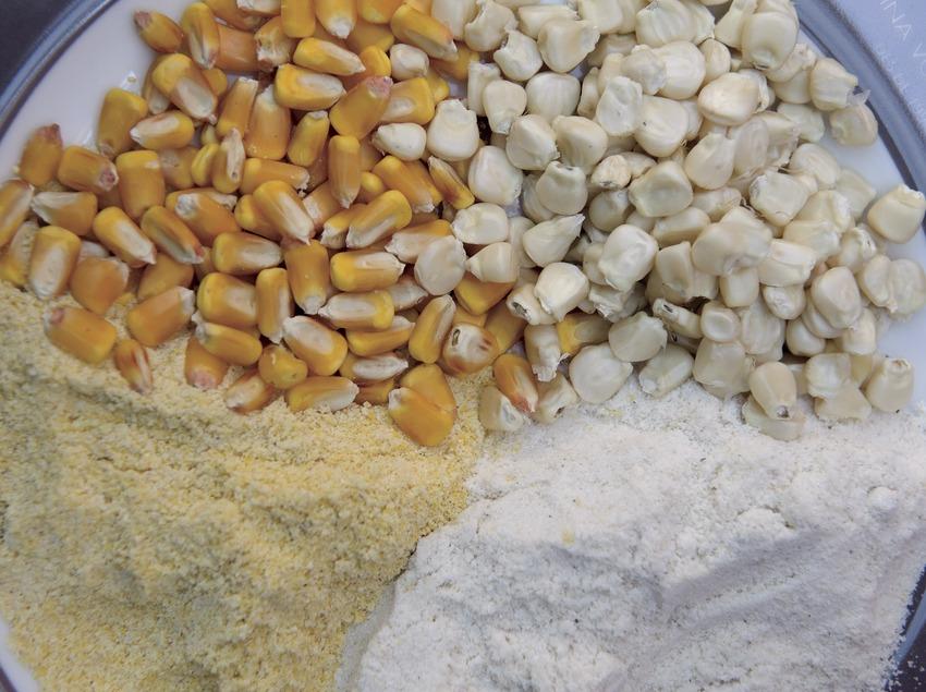 Blat de moro groc i blanc, sencer i en pols