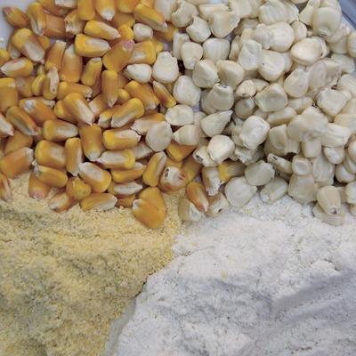 Blat de moro groc i blanc, sencer i en pols (Marc Castellet)