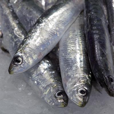 Peix blau al mercat