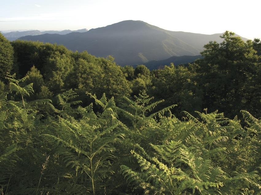 Naturgebiet Les Guilleries-Savassona (José Luis Rodríguez)