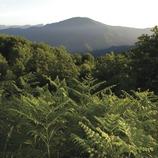 Espai Natural de les Guilleries-Savassona - Itinerari de Can Mateu
