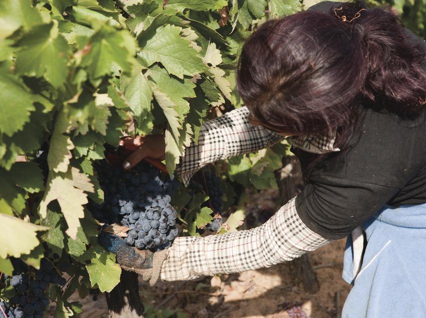 Proceso de elaboración del vino  (Imagen M.A.S.)