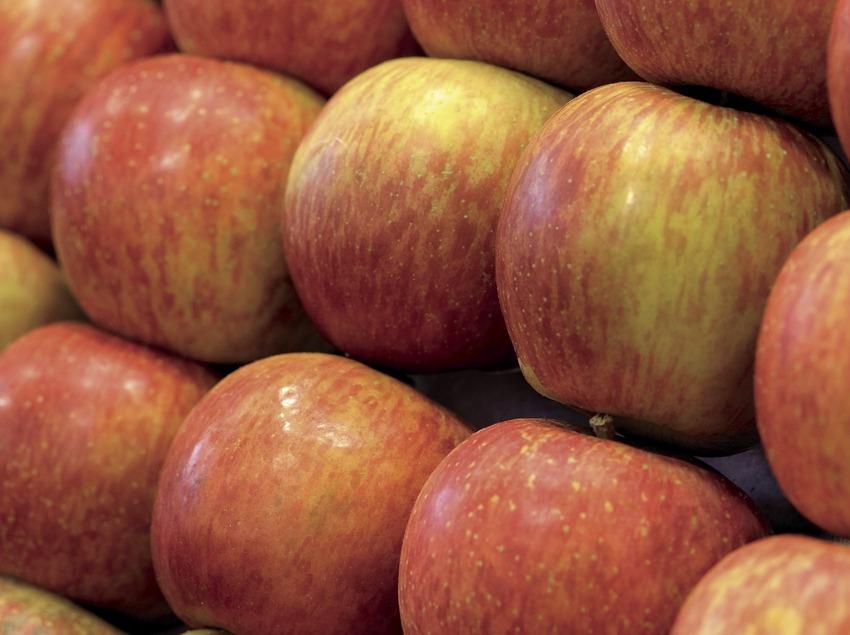 Caisse de pommes Golden de Lleida