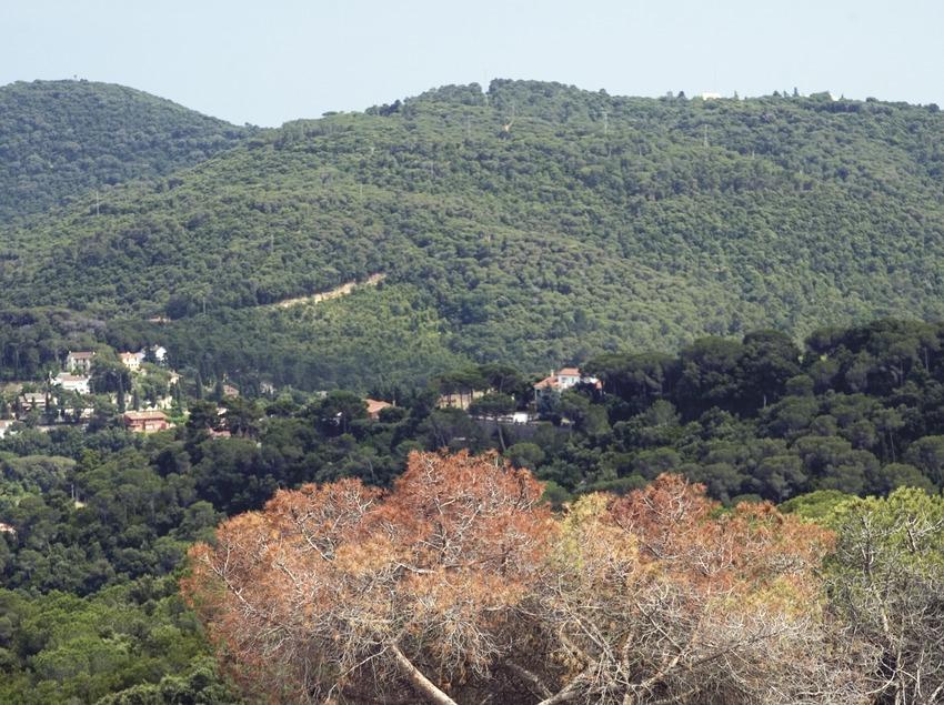 La Roca del Valles, bosque del Orrius (Juan José Pascual)