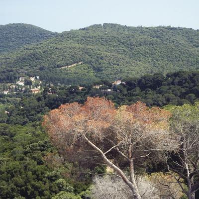 La Roca del Valles, bosque del Orrius