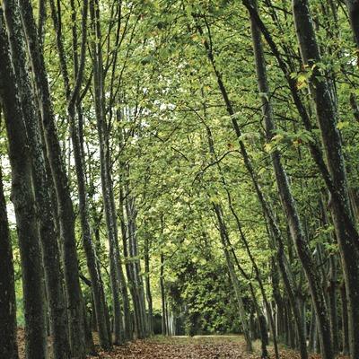 Santa Coloma de Farners. Parc de Sant Llorenç   (Consorci de Viles Termals)