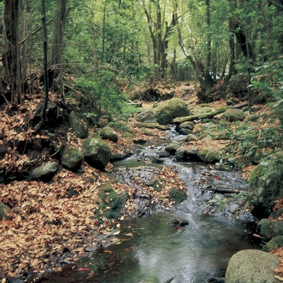 Bosc de riba al Montseny