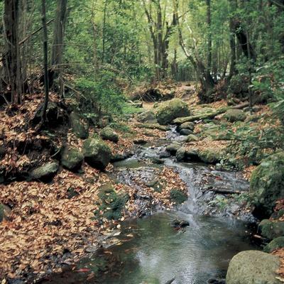 Bosque de ribera en el Montseny