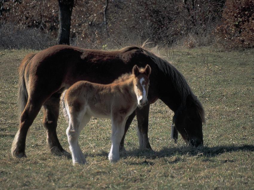 Cavalls pasturant  (Servicios Editorials Georama)