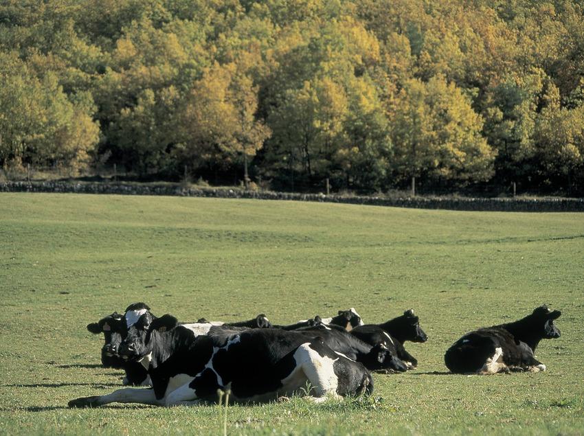 Weide in der Nähe von Sant Cristòfol, Sierra del Cadí.  (Servicios Editorials Georama)