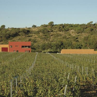 Vinyes d'Olivardots