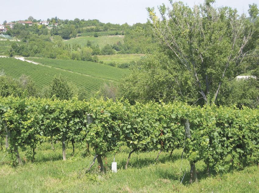 Cultura i paisatges a través del vi   (Viemocions (Sapienstravel))