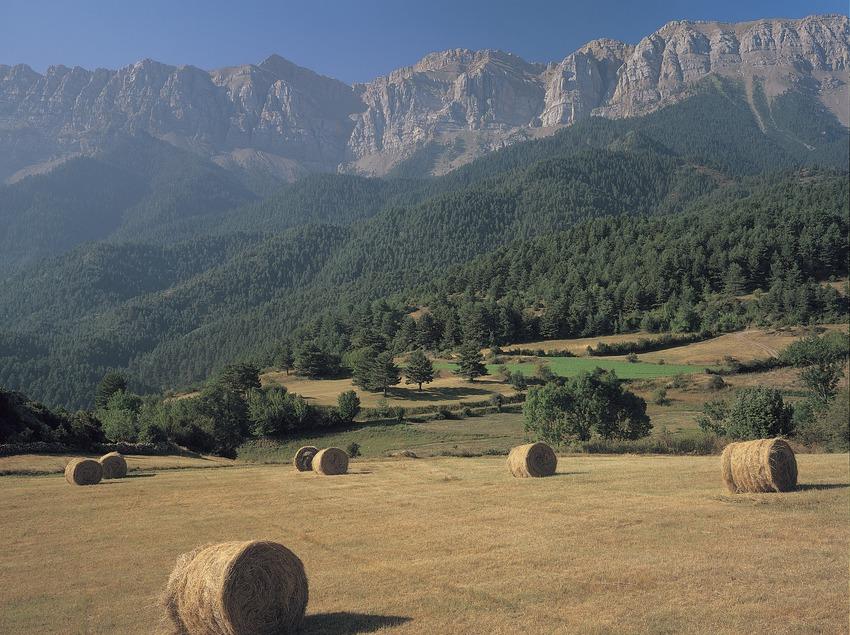 Campo de cultivo a Estana.