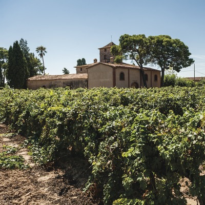 De Muller, viñedos con bodegas y casa familiar de fondo. (Marc Castellet)