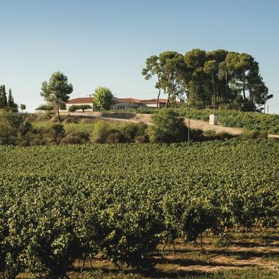 Vins i Caves Olivella Galimany, viñedos y masía-bodega de fondo.