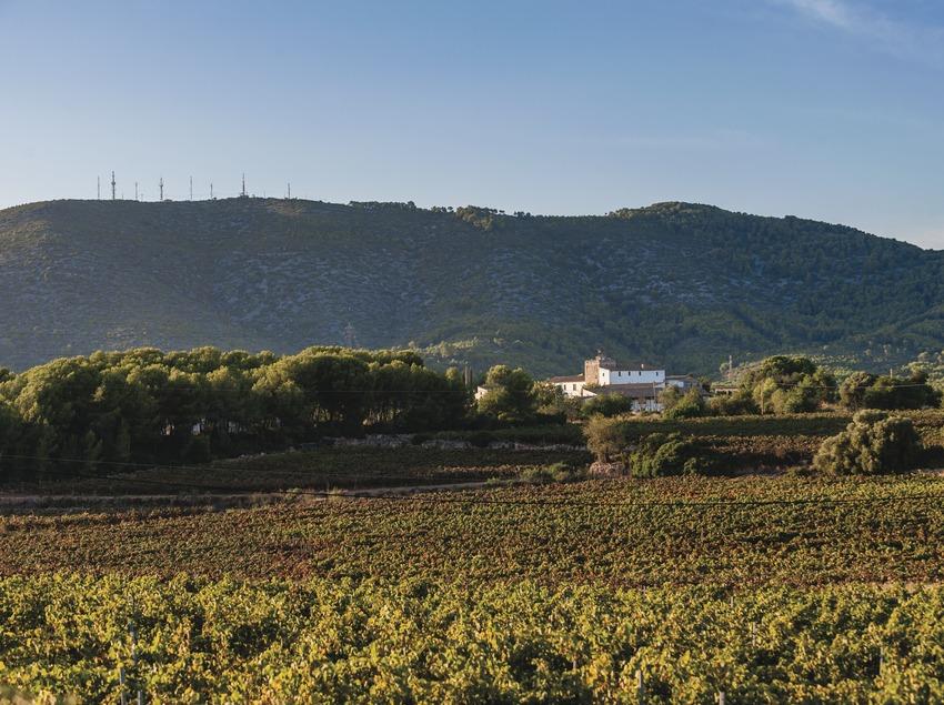 Celler Vega de Ribes, vinyes amb el mas al fons, al peu de la muntanya.