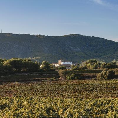 Celler Vega de Ribes, vinyes amb el mas al fons, al peu de la muntanya. (Marc Castellet)