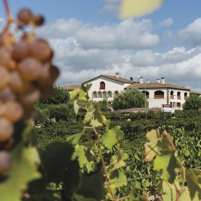 Ca l'Esteve, detalle de uva y viñedo con el restaurante de fondo.