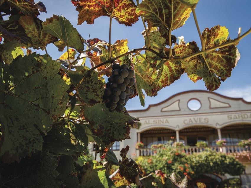 Alsina & Sardà, detalle del viñedo con cava de fondo. (Marc Castellet)