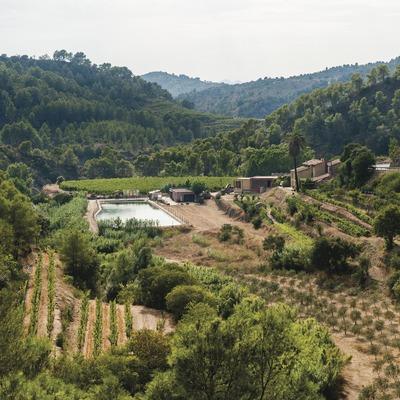 Mas Martinet Viticultors, vista de la finca. (Marc Castellet)