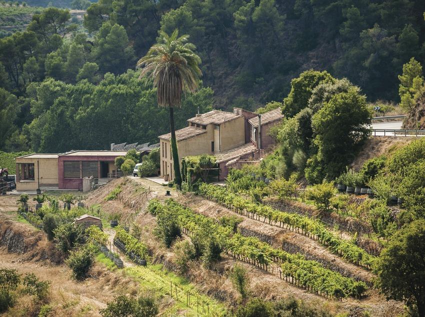 Mas Martinet Viticultors, vista de la finca (detall). (Marc Castellet)
