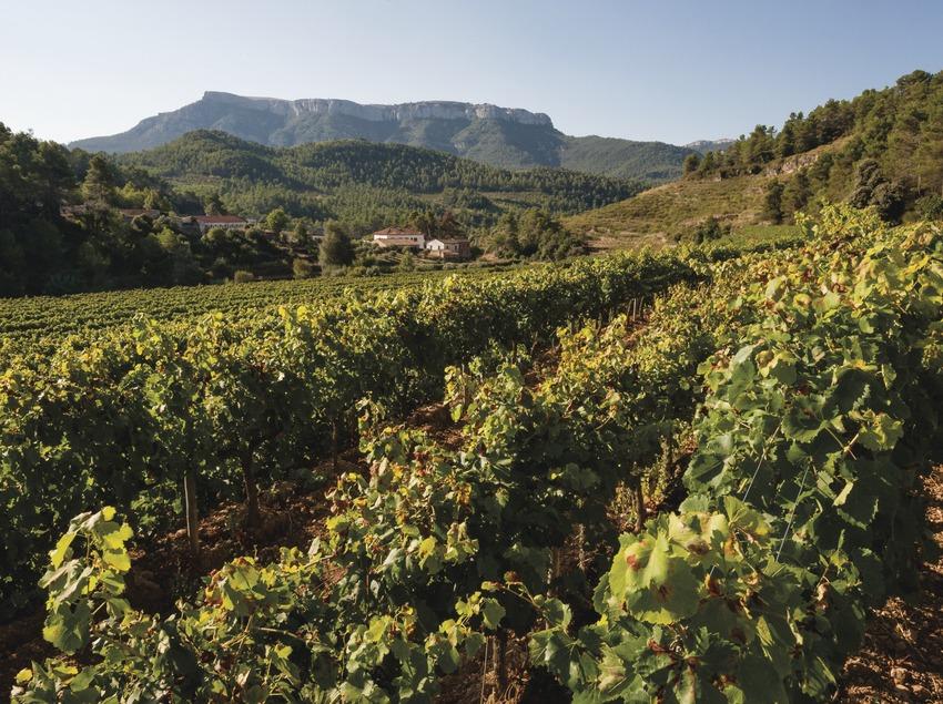 Cellers Sant Rafel, viñedos con la bodega y la montaña La Mola de fondo.