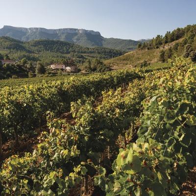 Cellers Sant Rafel, vinyes amb el celler i la muntanya La Mola de fons.