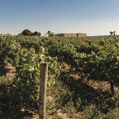 Masetplana, viñedos con el molino de aceite en el medio. (Marc Castellet)