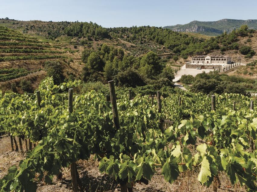 Bodegas Mas Alta, vista del celler des de les vinyes.