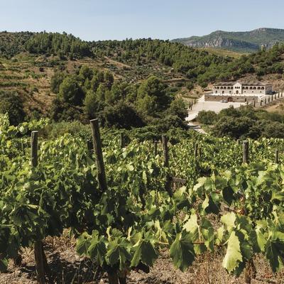 Bodegas Mas Alta, vista de la boodega desde los viñedos.