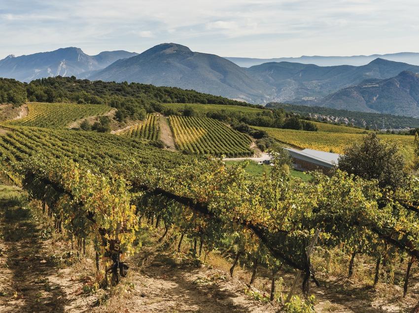 Castell d'Encús. Viñas de alta montaña.