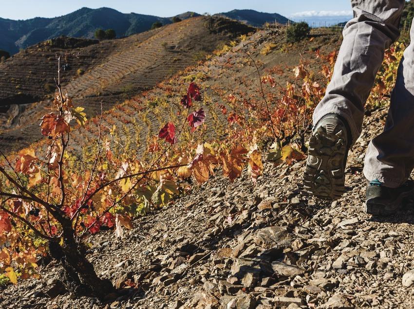 Priorat. Primer plano de botas de trekking entre viñas   (Marc Castellet)