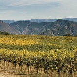 Castell d'Encús. Viñas de alta montaña   (Marc Castellet)