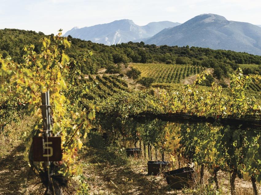 Castell d'Encús. Vinyes d'alta muntanya   (Marc Castellet)