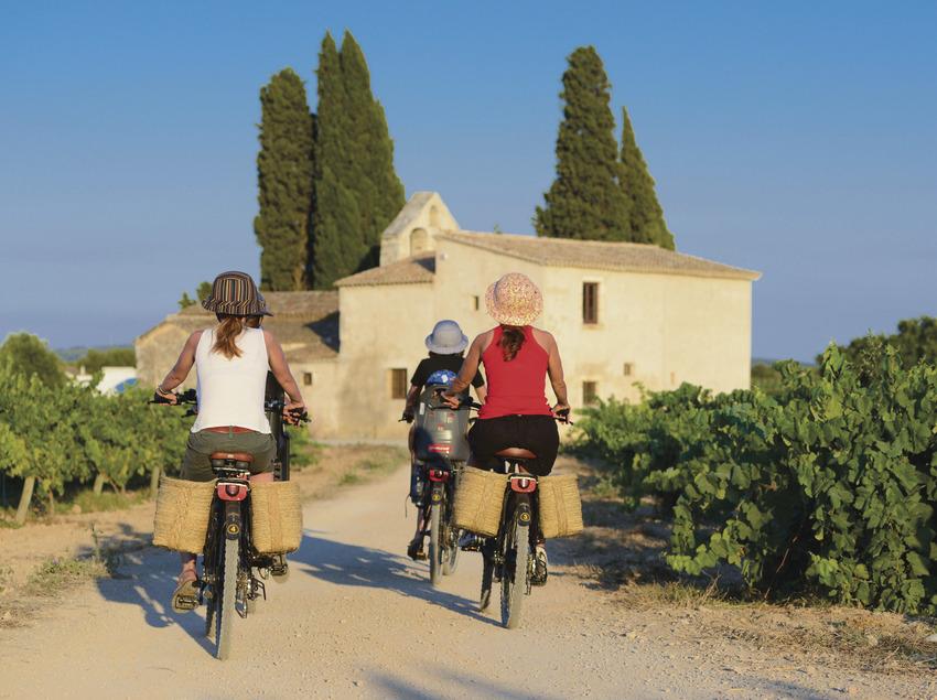 Ruta en bicicleta por un camino entre viñedos.