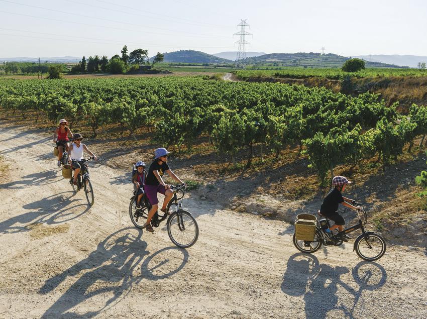 Ruta amb bicicleta a la vora d'una vinya.