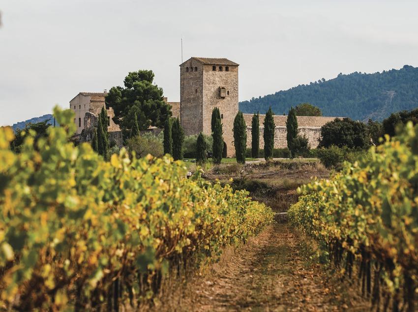 Castell de Milmanda. Viñas y castillo de fondo