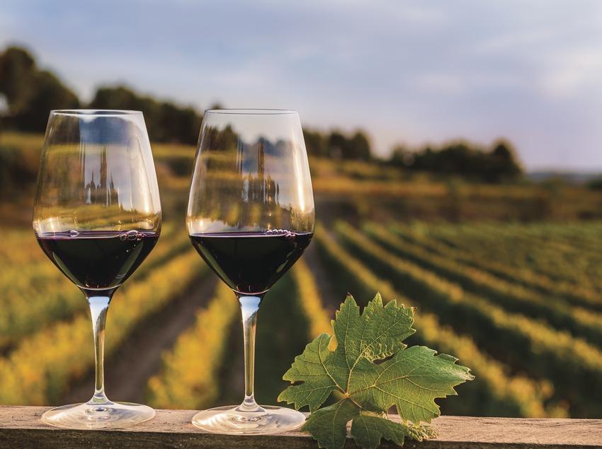 Albet i Noya. Dos copas de vino con las viñas de fondo.