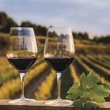 Albet i Noya. 2 copes de vi amb vinyes de fons.