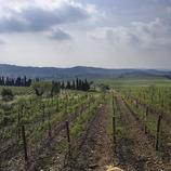 Vinyes Castell de Peralada   (Rafael López-Monné (Fons del CRDO Empordà))