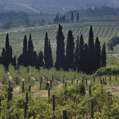 Ruta del vi DO Empordà
