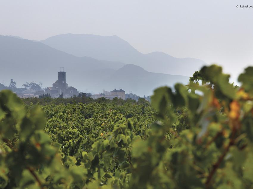 Vinyes de l'Empordà   (Rafael López-Monné (Fons del CRDO Empordà))