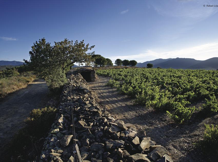 Vinyes DO Empordà   (Rafael López-Monné (Fons del CRDO Empordà))