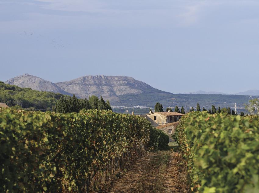 Vinyes del celler Mas Oller, DO Empordà   (Rafael López-Monné (Fons del CRDO Empordà))