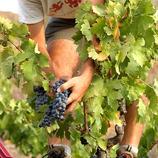 Ruta del vi del Priorat